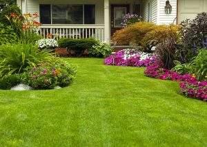 Gardening Services Gordon by Northside Tree & Garden