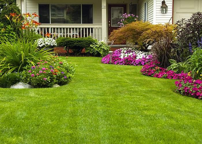 Gardening Services Waitara by Northside Tree & Garden