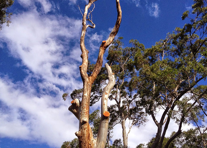 Tree Pruning Eastern Suburbs by Northside Tree & Garden Services