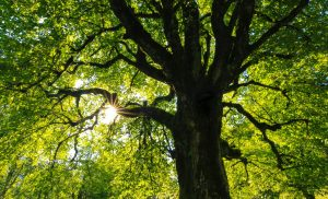 7 Benefits of Having Trees as Part of Your Home Landscape