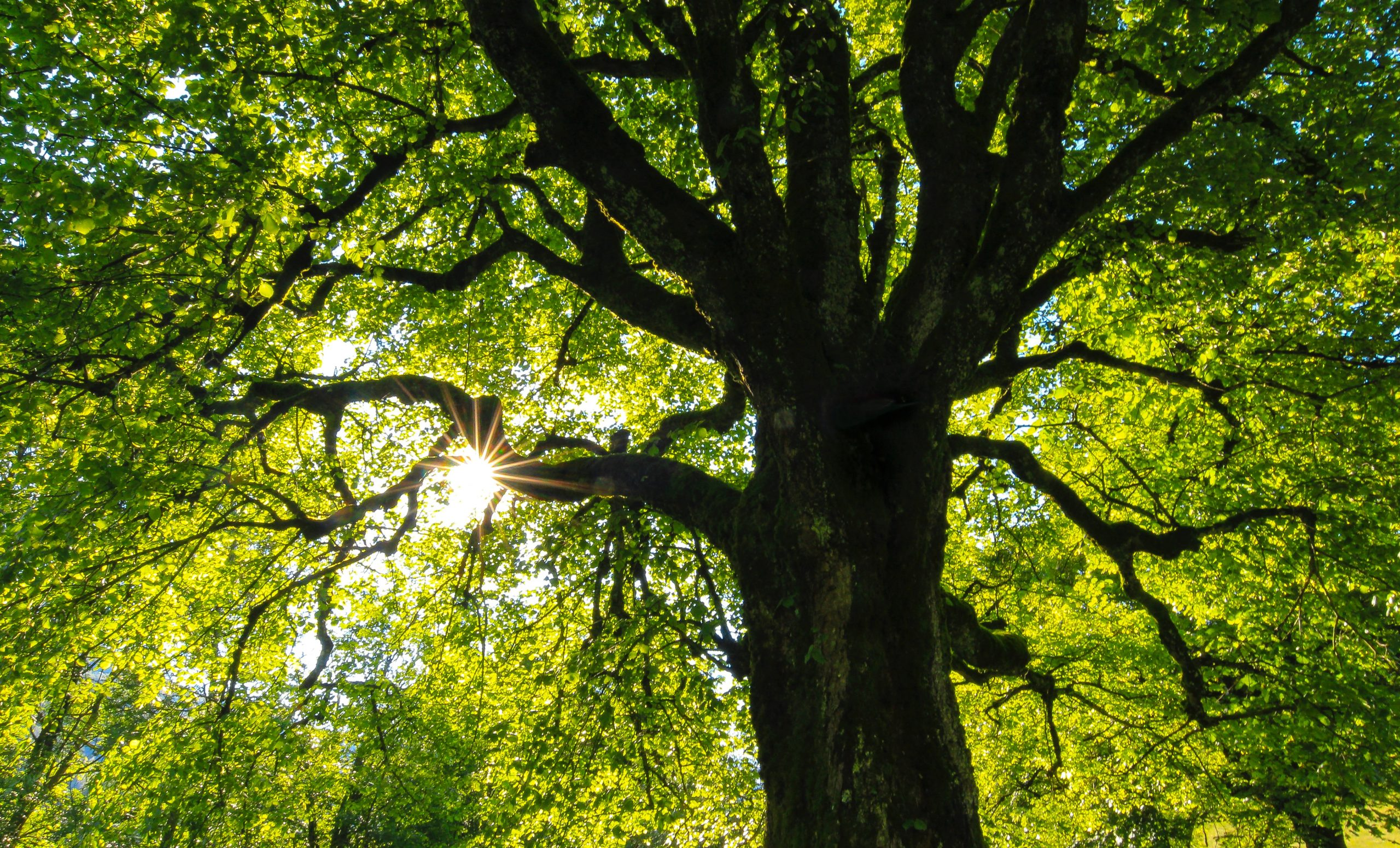 7 Undeniable Reasons Tree Maintenance Is Important