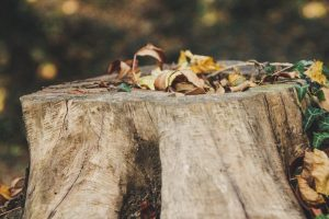Read more about the article How to Remove an Old Tree Stump From Your Yard