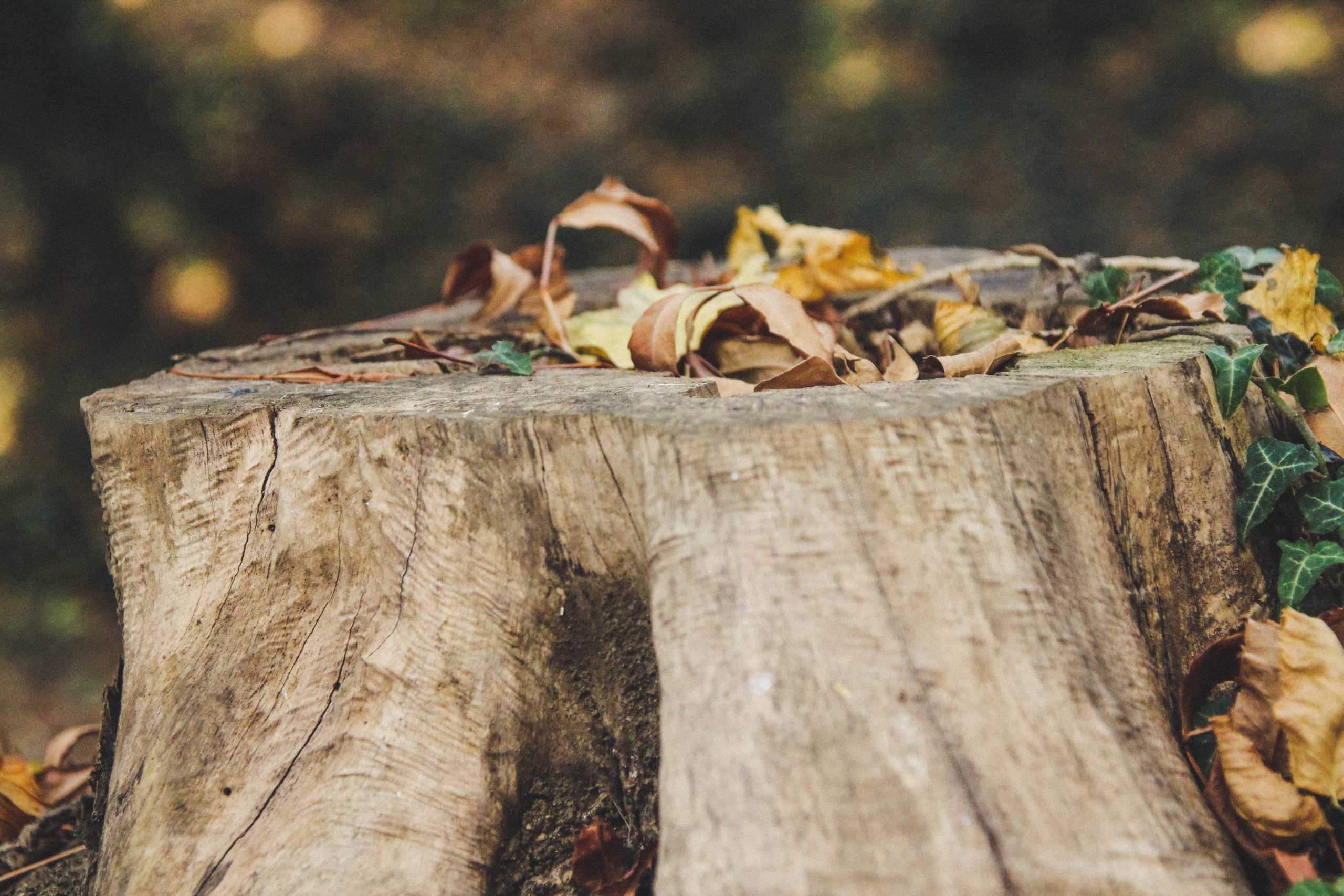 How to Remove an Old Tree Stump From Your Yard