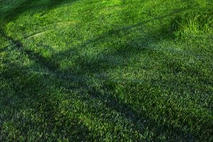 On Winter Landscaping: Can You Lay Turf During the Cold Season?