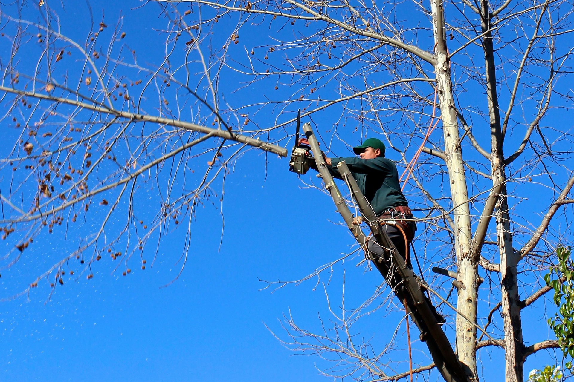 3 Tips for Caring For Your Trees During Winter