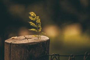 5 Reasons to Carry Out Tree and Stump Removal During Winter