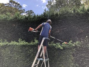 Everything You Need to Know About Gardening in Dry Locations