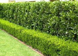 Read more about the article 5 Landscaping Tips to Create a Stunning Dream Home