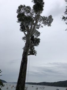 Read more about the article Avoid These DIY Tree Removal Mistakes at All Times