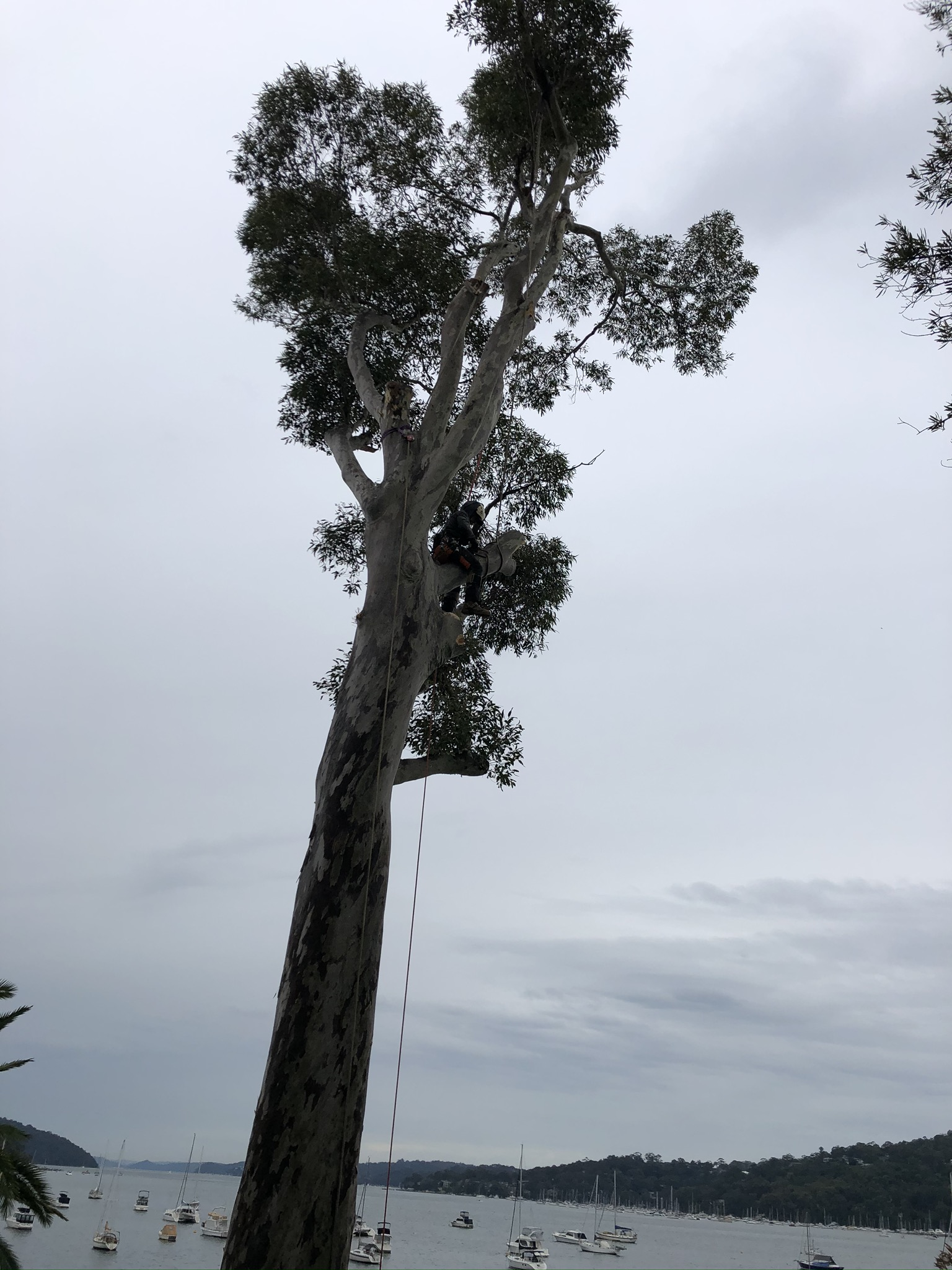 Avoid These DIY Tree Removal Mistakes at All Times