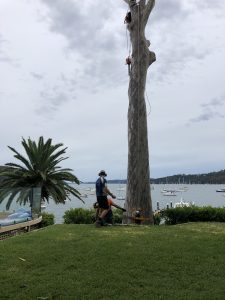 Read more about the article Important Things to Know About Tree Removal in NSW