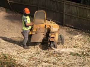 Tree Stump 101: 4 Reasons to Get Tree Stumps Removed